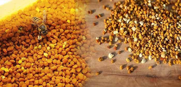 Сушат пчелиную пыльцу