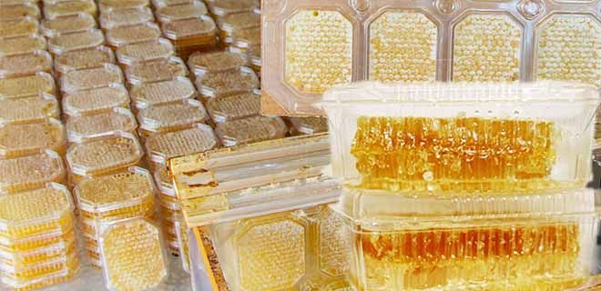 Медовые соты в контейнере