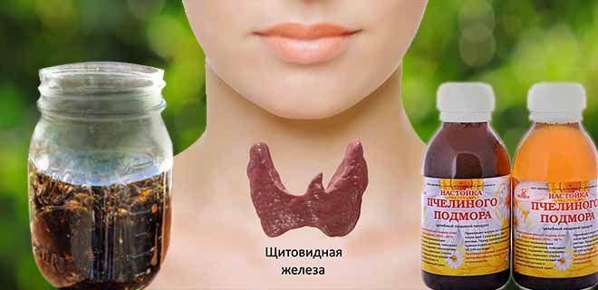 Настойка из пчелиного подмора от дисфункции щитовидной железы