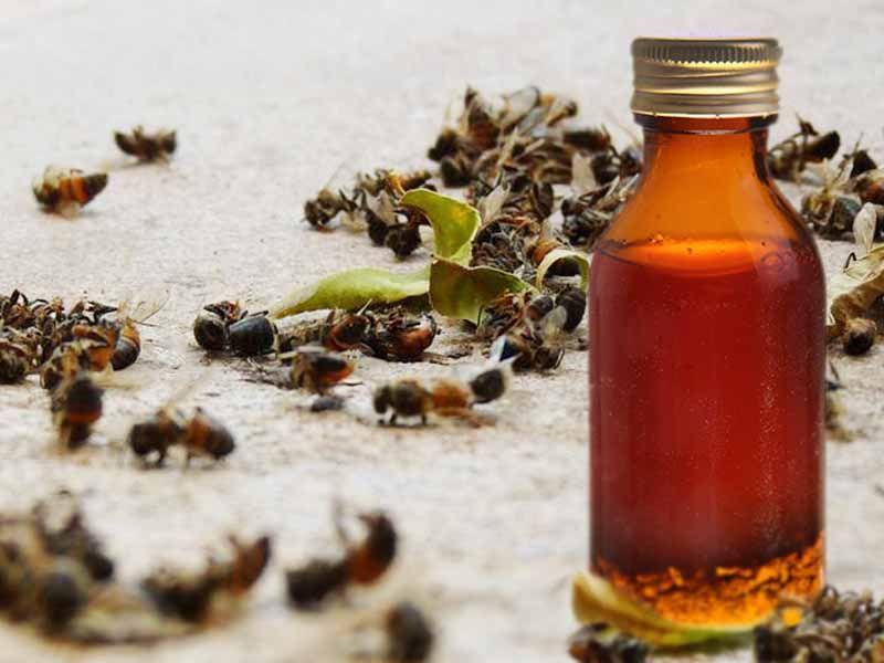 Настойка из пчел на спирту средство для сосудов из чеснока и спирта