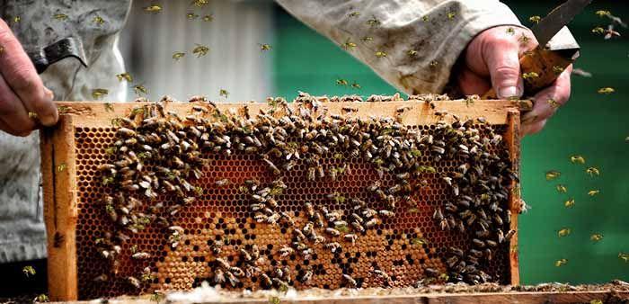 укрепление пчелиных семей