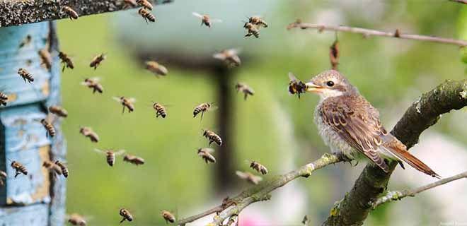 Птицы на пасеке
