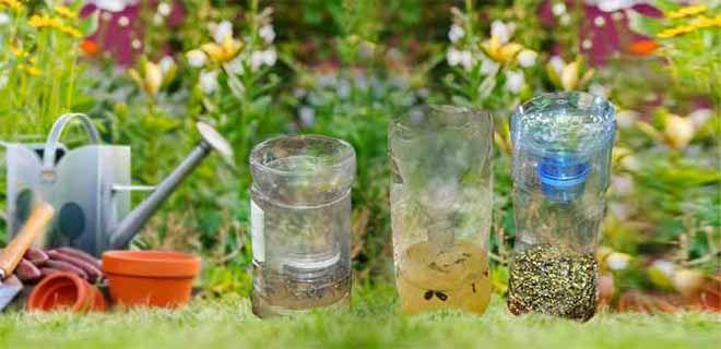 Ловушка для пчел с отравой