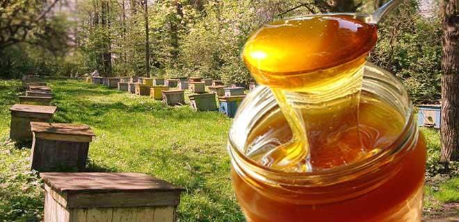 Мед из леса