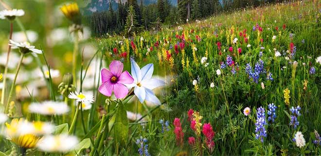 Поляна с цветами