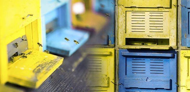 Ульи синие, голубые и жёлтые оттенки