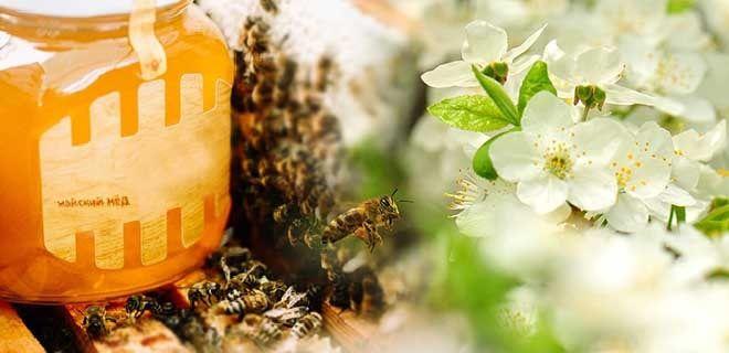 Весенний мед