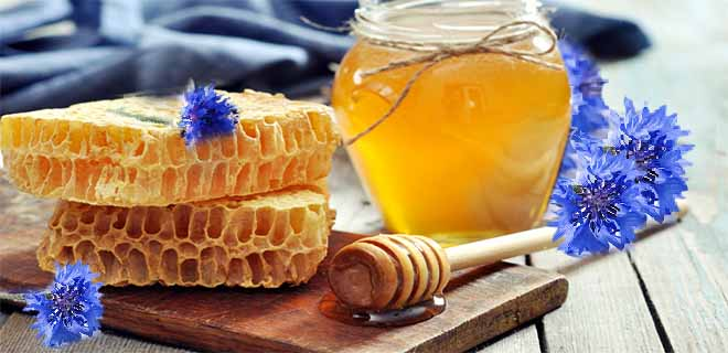 Мед из васильков
