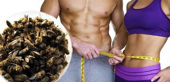 Похудеть с помощью пчелиного подмора