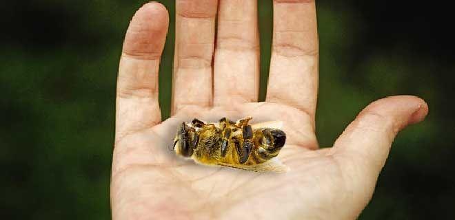 Вирусный паралич пчел