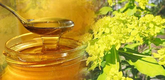Мед молочай