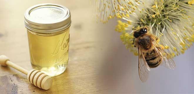 Ивовый мед