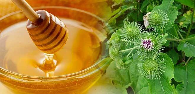 Лопух и мед