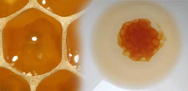 Биологическая память меда